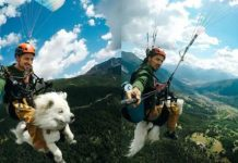 dog-paragliding-with-owner-viral-video